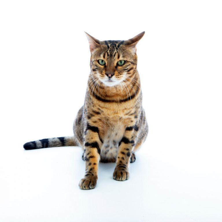 cat pet photography