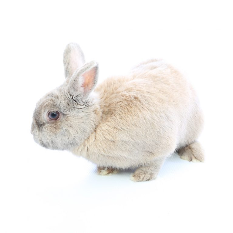 rabbit pet photographer